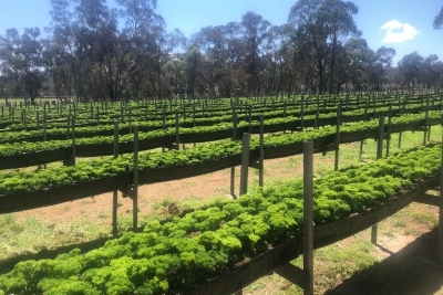 Boutique Parsley & Garlic Farm - Incl. Freehold (CA1004)